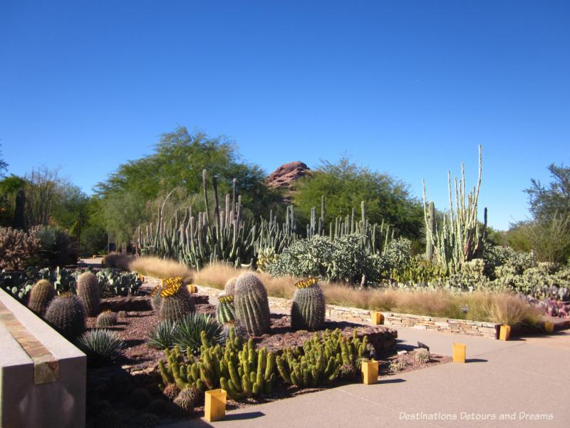 Path through the Desert Botanical Garden in Phoenix, Arizona