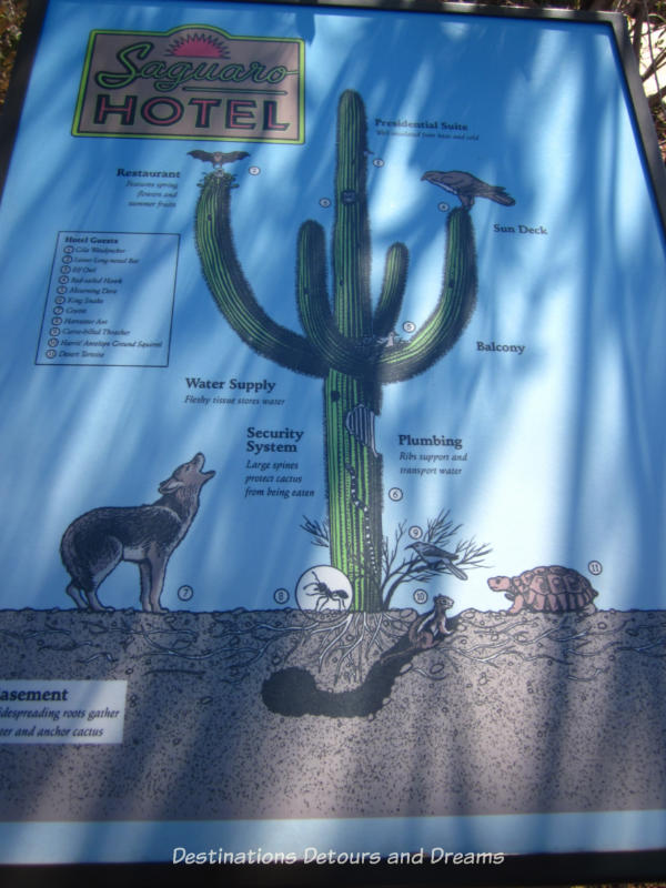 Saguaro hotel information at Desert Botanical Garden