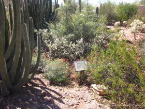 Desert wash at the Phoenix Desert Botanical Garden
