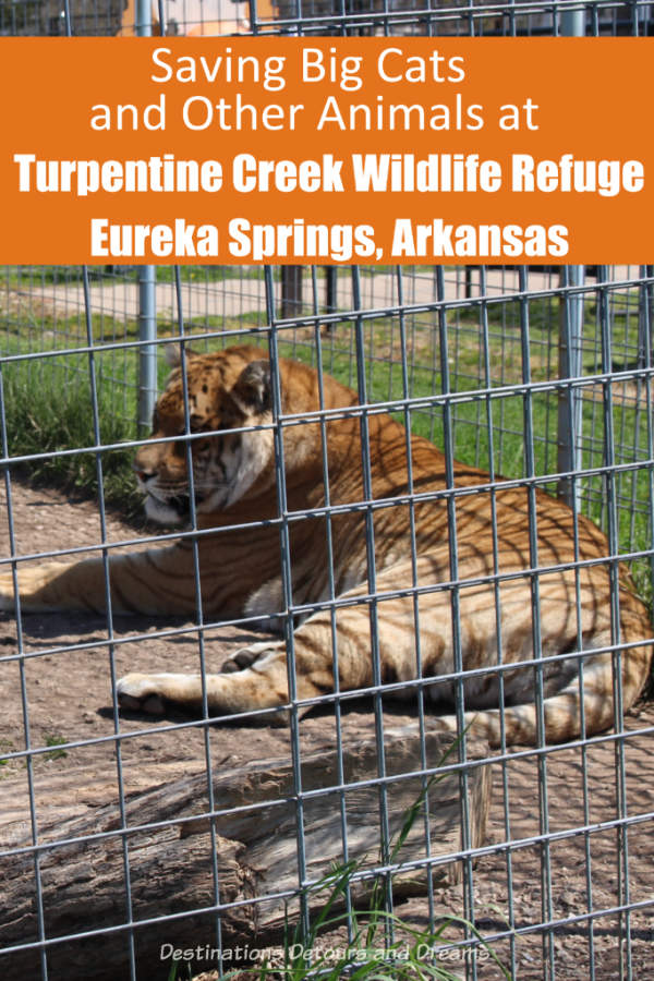 Saving big cats and other animals at Turpentine Creek Wildlife Refuge in Eureka Springs, Arkansas #Arkansas #EurekaSprings #animalrefuge #wildlifesanctuary