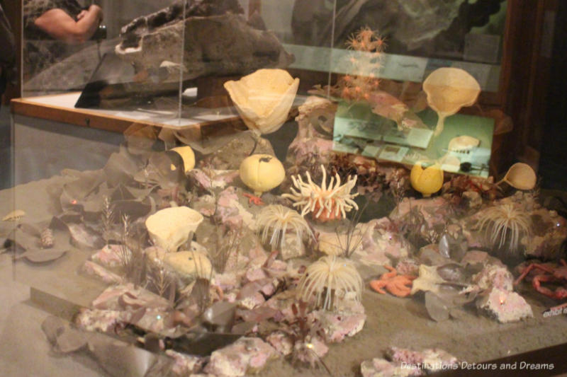 Beaufort Sea coral display at Museum of the North