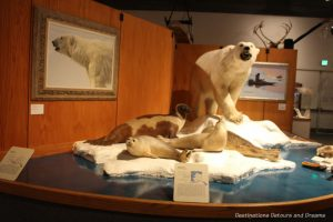 Coastal mammals at Museum of the North