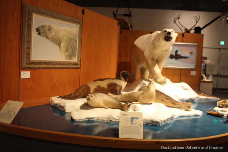 Coastal mammals at Museum of the North