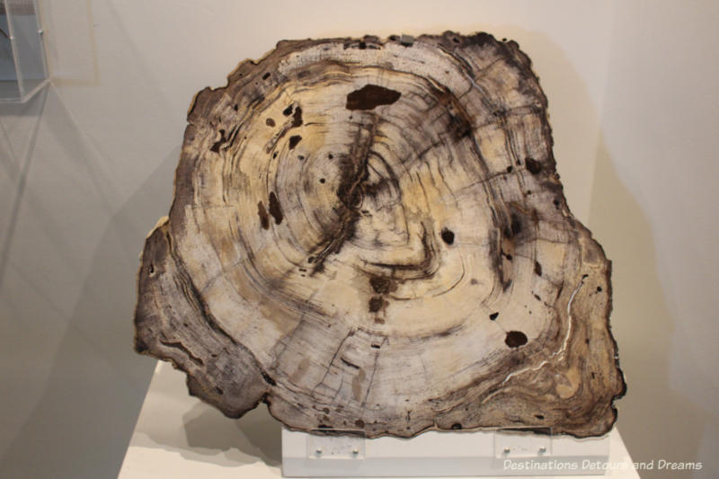 Ancient petrified wood at Museum of the North