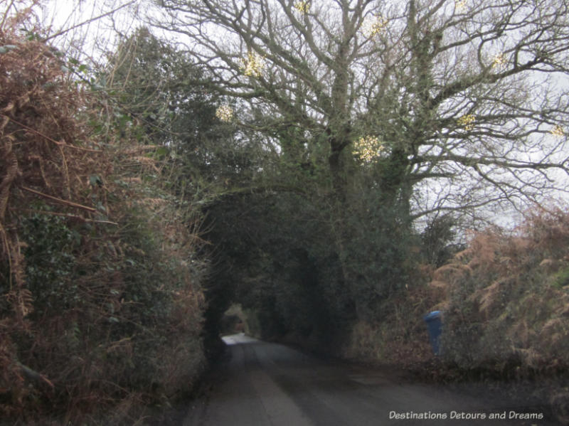 Lights in the trees along a country lane in England