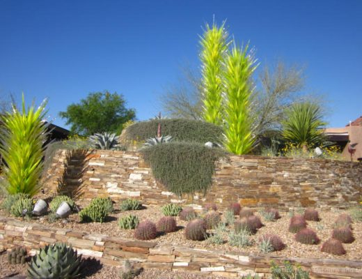 Cacti, and Chihuly art trees at front of the Desert Botanical Garden in Phoenix