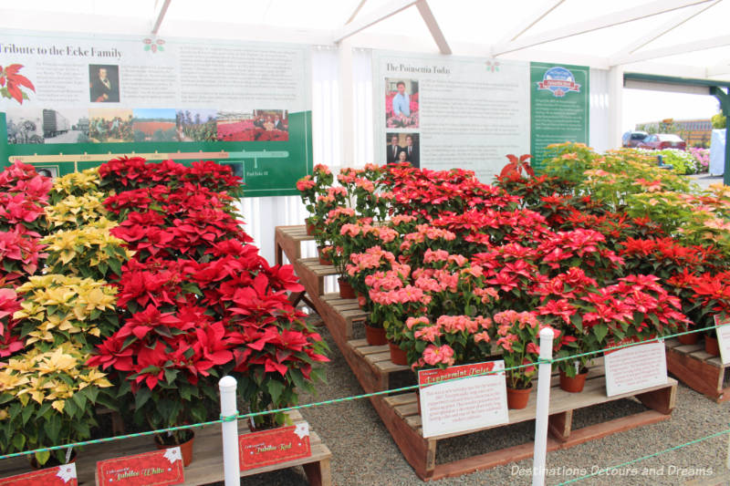Poinsettia information display at Carlsbad Ranch