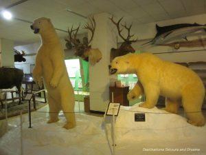 Stuffed bears at the Ralph Foster Museum in Branson, Missouri