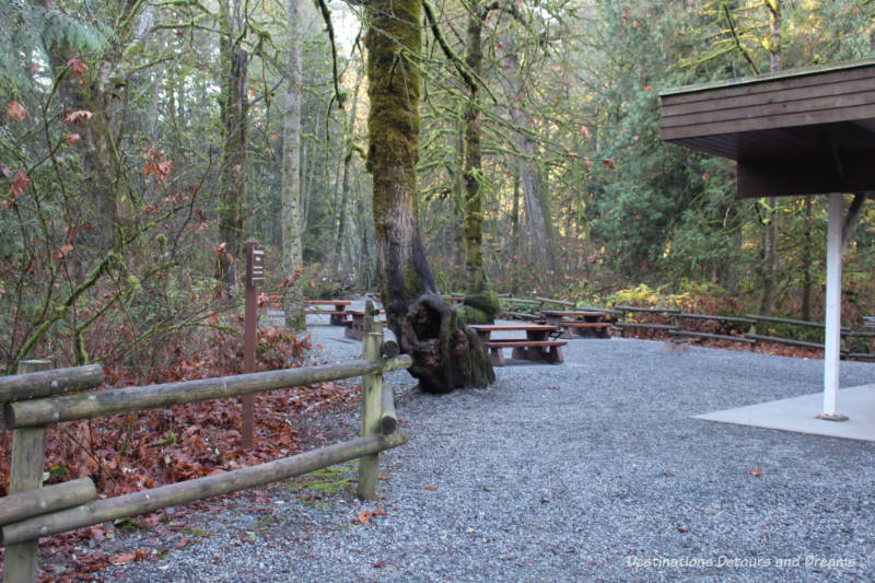 Part of the picnic area at Goldstream Provincial Park on Vancouver Island