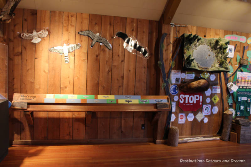 One of the displays in the Visitor Centre at Goldstream Provincial Park