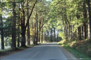 Forested drive on Salt Spring Island, Canada