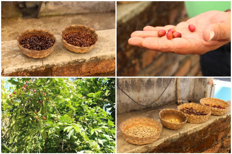Various stages of coffee bean processing at La Quinta Mari, San Sebastián del Oeste, Mexico