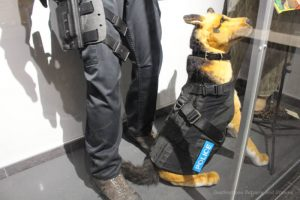 Dog armor on display at Winnipeg Police Museum