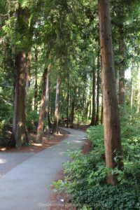 A forested path on campus at University of British Columbia, Vancouver, Canada