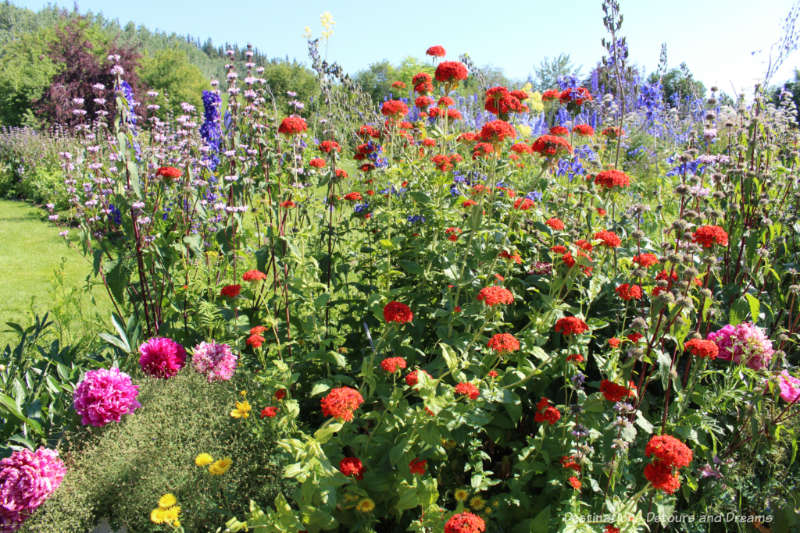 Colourful blooms at Georgeson Botanical Garden in Fairbanks, Alaska