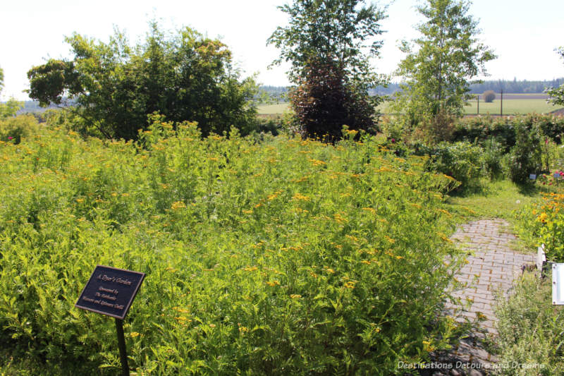 Dye Garden at Georgeson Botanical Garden in Fairbanks, Alaska