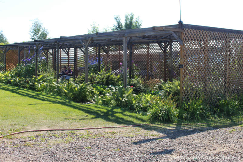 Shade garden under latticework at Georgeson Botanical Garden in Fairbanks, Alaska