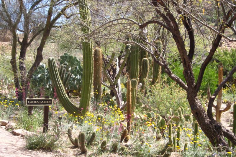 Cactus Garden at Boyce Thompson Arboretum