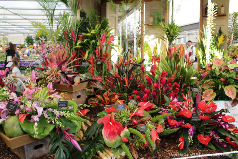 Red and green of the tropical plants in the Barbados display at the 2019 Chelsea Flower Show