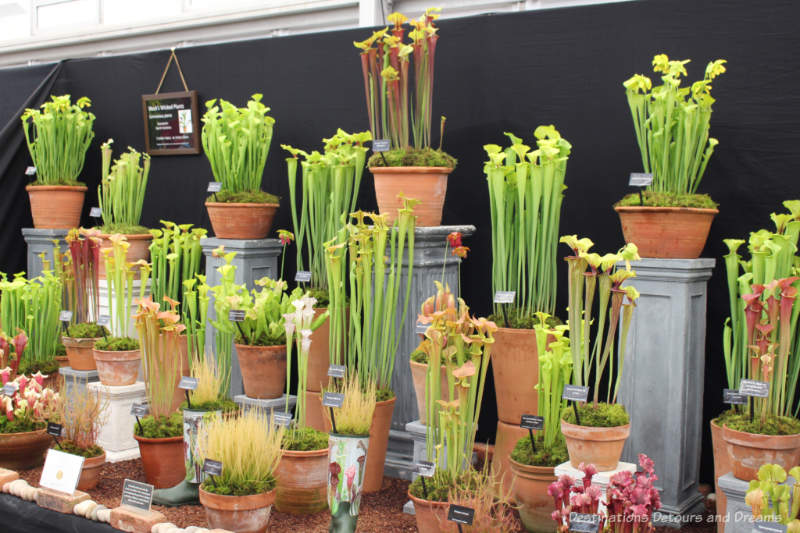 Display of carnivorous plants at the Chelsea Flower Show
