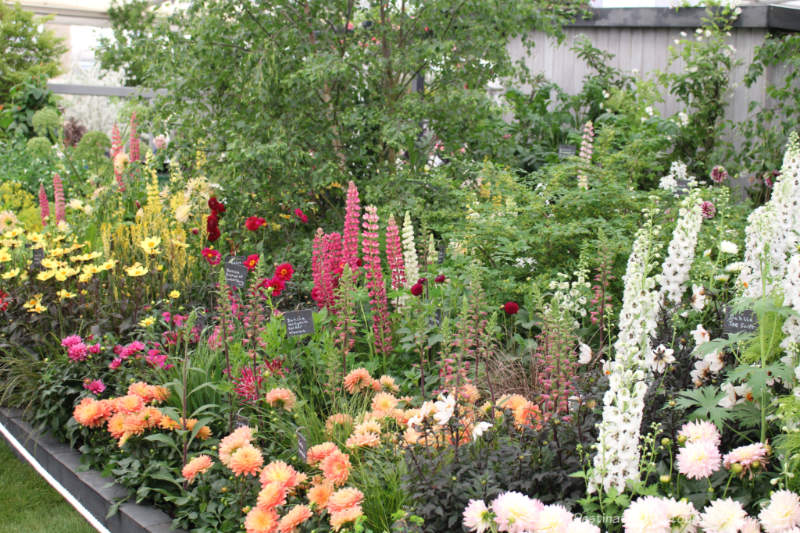Meadow-like display of flowers at the Chelsea Flower Show