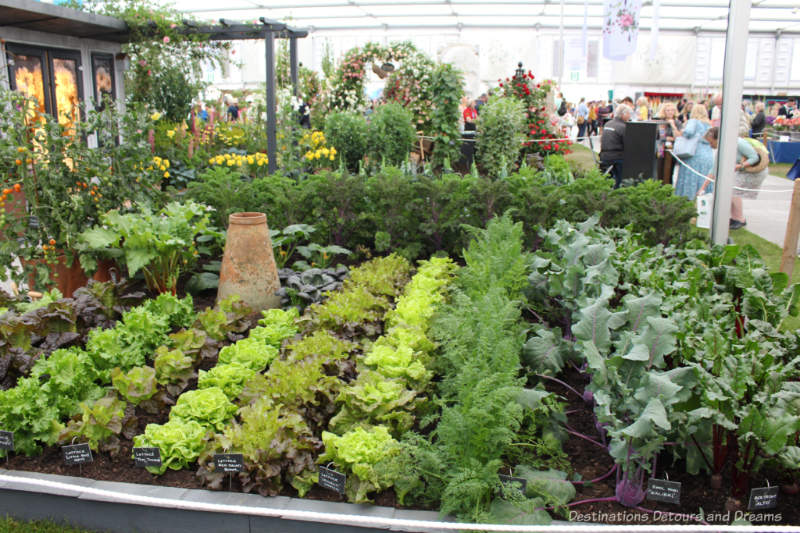 Edible plants at the Chelsea Flower Show