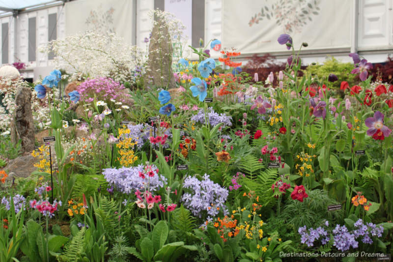 Wildflower display at the 2019 Chelsea Flower Show