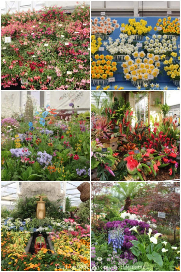 A sample of the displays in the Great Pavilion at the 2019 Chelsea Flower Show