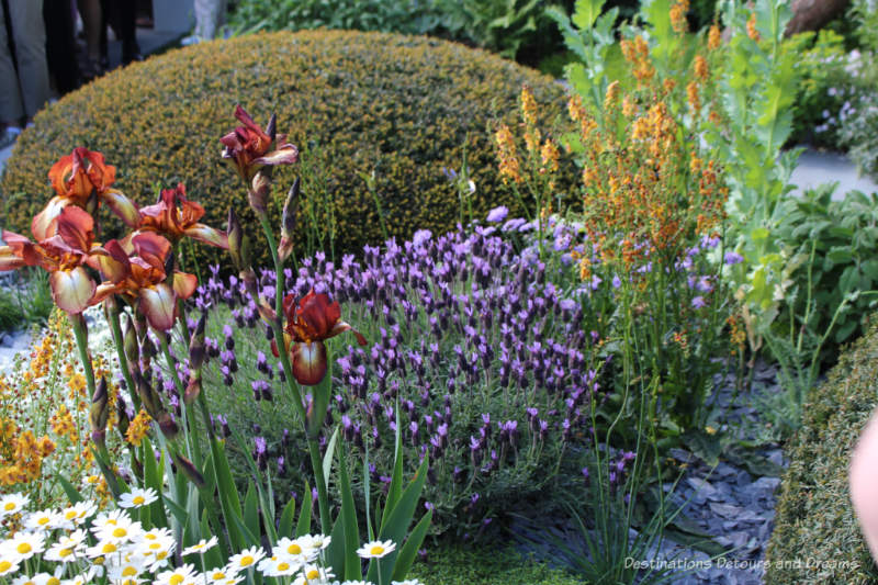 Topiary dome, purple and yellow flowers in the Chelsea 2019 Morgan Stanley Garden