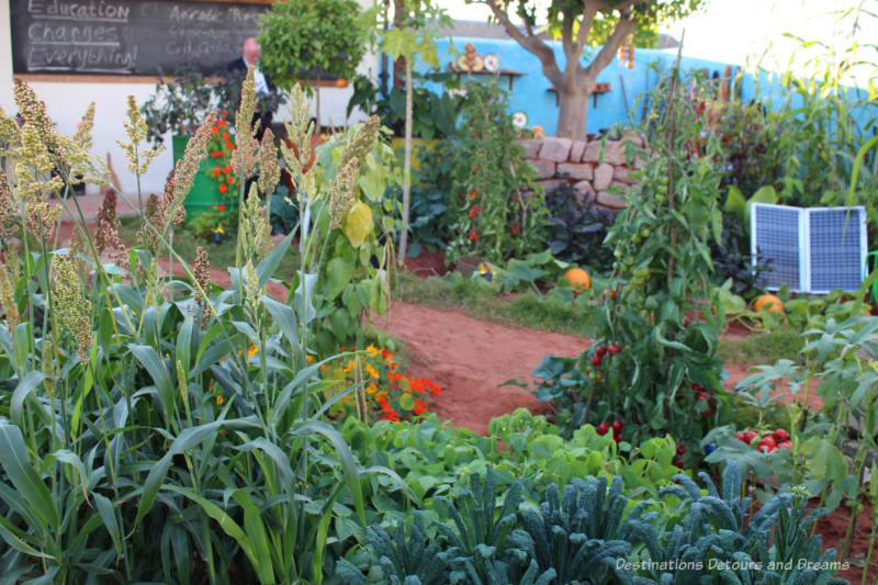 Edible crops in front of a rural classroom in the Giving Girls In Africa A Space To Grown Garden at the 2010 Chelsea Flower Show