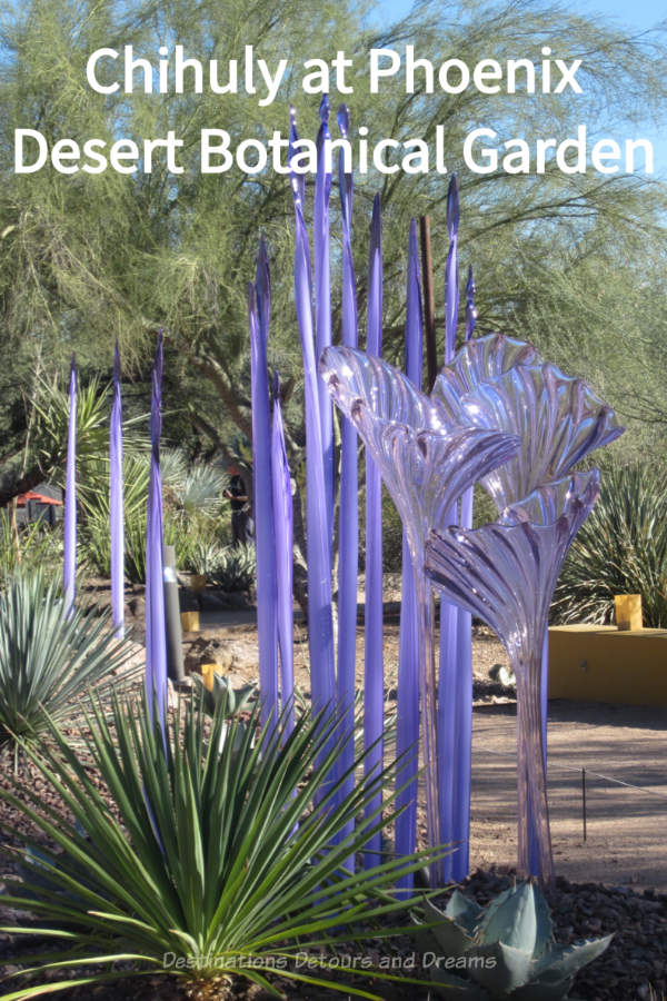 Dale Chihuly works on display at Desert Botanical Garden in Phoenix, Arizona illustrate the magic of a garden setting for his unique glass art #Chihuly #glassart #artinthegarden