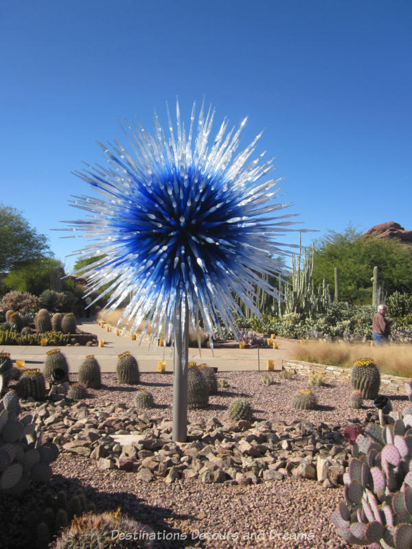 Chihuly blue and white spiked sculpture at the Desert Botanical Garden