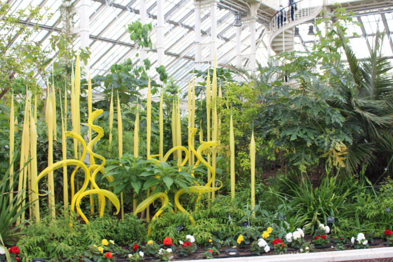 Yellow heron and reed glass sculptures by Chihuly amid the greenery of Kew Gardens Temperate House