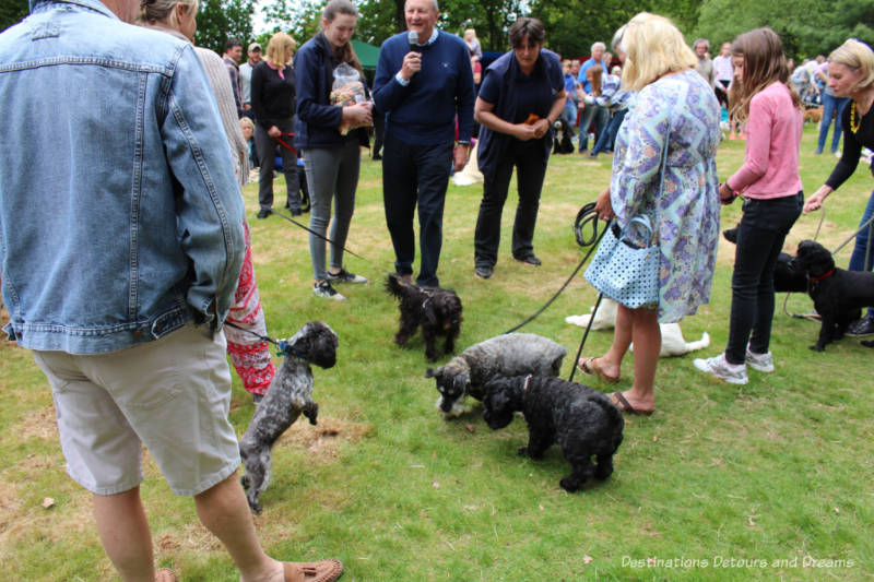 Biscuit catch dog competition at an English village fête