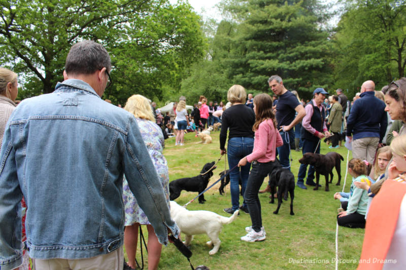 Dog competition at an English village fête