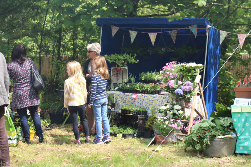 Plant stall at an English village fête