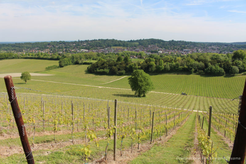 Valley and Dorking view from hill on Denbies Wine Estate