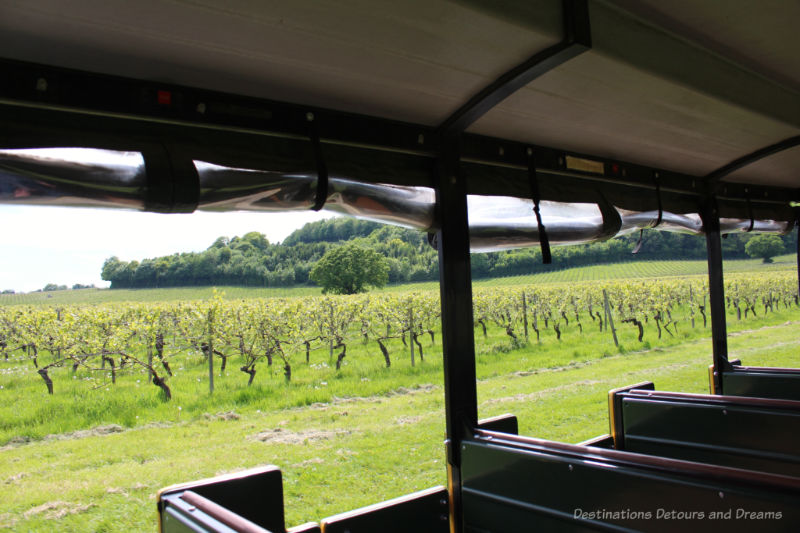 Denbies Vineyard Tour - view of vineyards on the hill from the train car