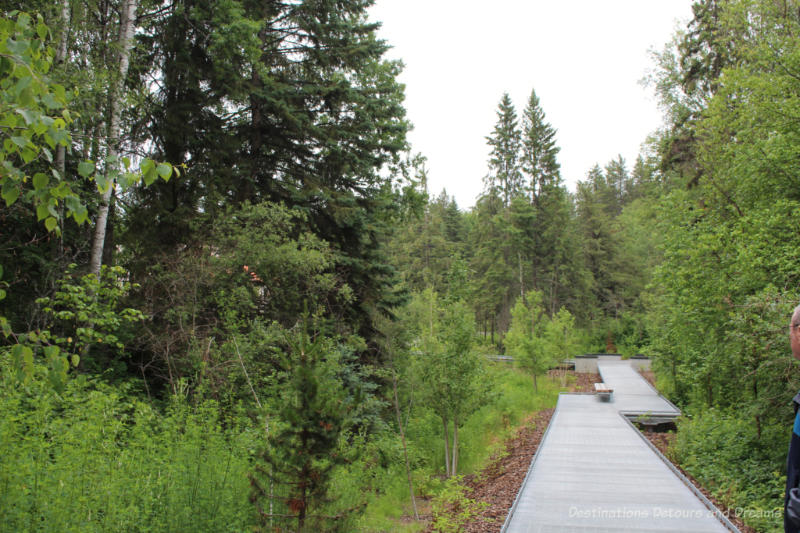 Walkway through Alberta trees to Aga Khan Garden