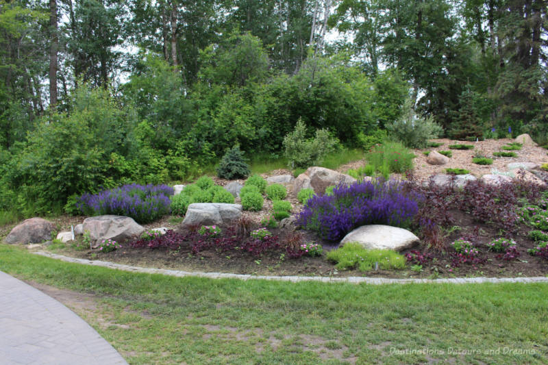 Bed of purple,green, and reddish alpine plants against a backdrop of prairie trees at the University of Alberta Botanic Garden