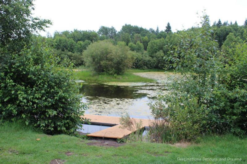 Marshy pond amid bush at University of Alberta Botanic Garden