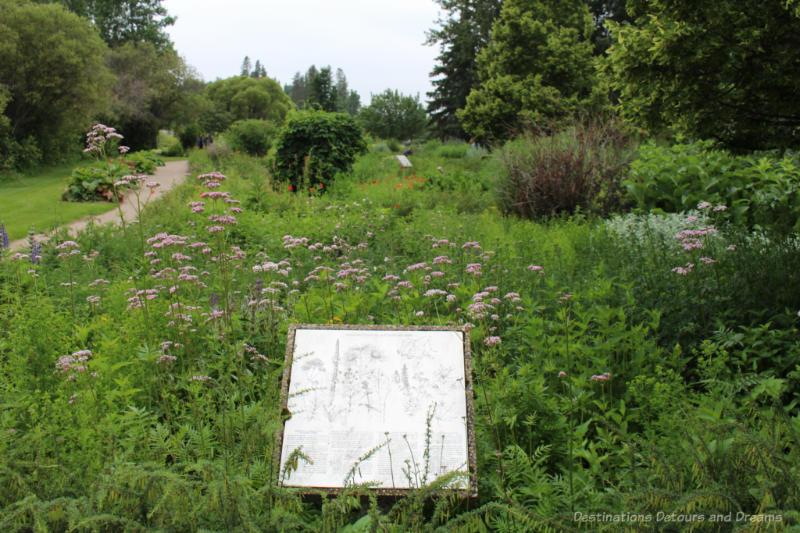 A wildish looking field of herbs at University of Alberta Botanic Garden