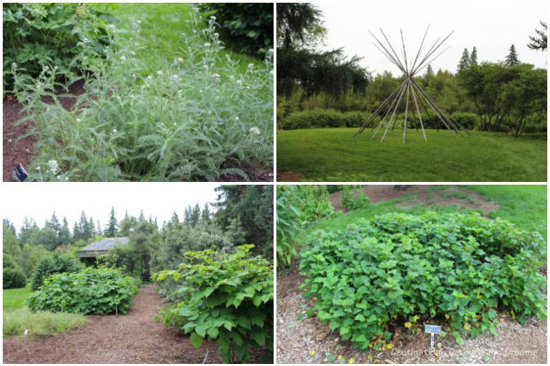 A collection of plants in the University of Alberta Botanic Garden Indigenous Garden