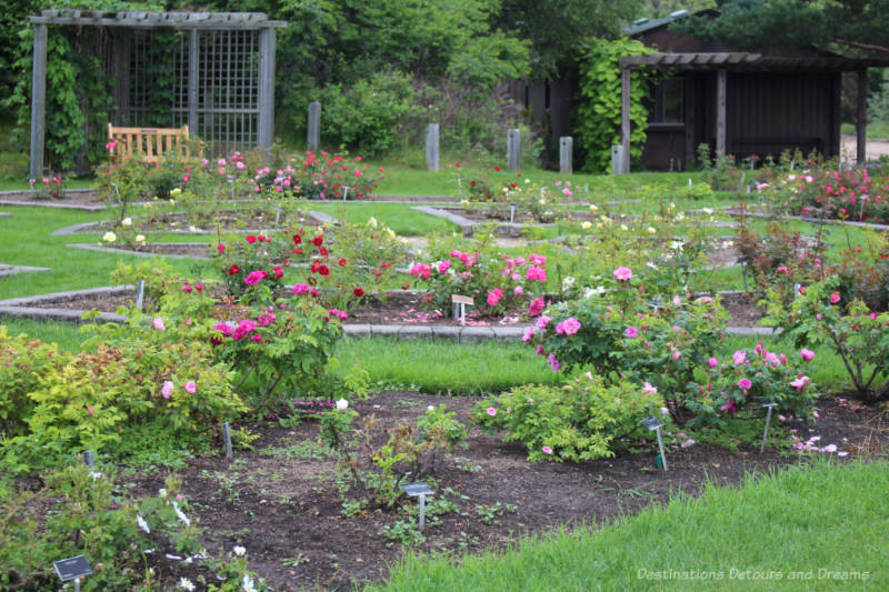 Beds of roses with pergola seating areas at back of garden in the Rose Garden at University of Alberta Rose Garden