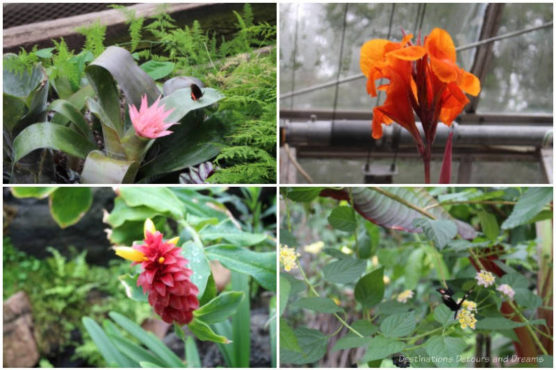 Samples of flowers (pink, orange, red, white) inside the U of A Botanic Garden Tropical Plant and Butterfly Showhouse