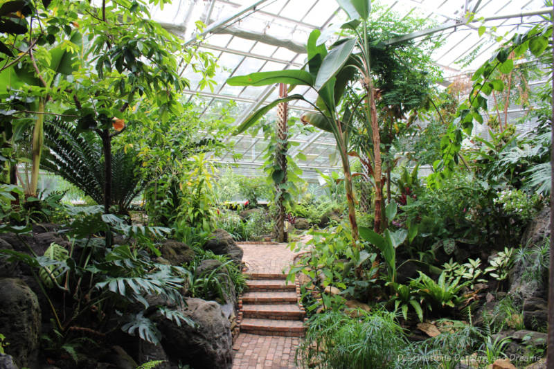 Lush green plants and a brick walkway insided the Tropical Plant and Butterfly Showhouse at U of A Botanical Garden