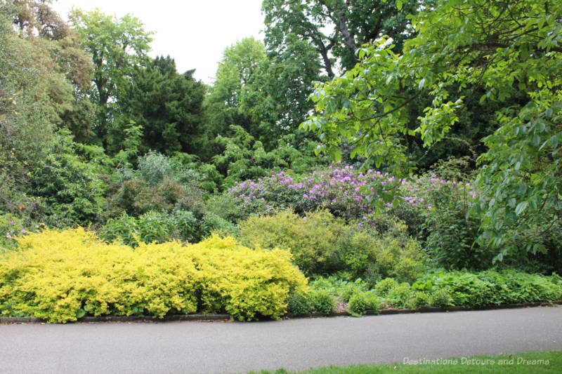 Flowering shrubs and trees along a walkway at Kew Gardens in London
