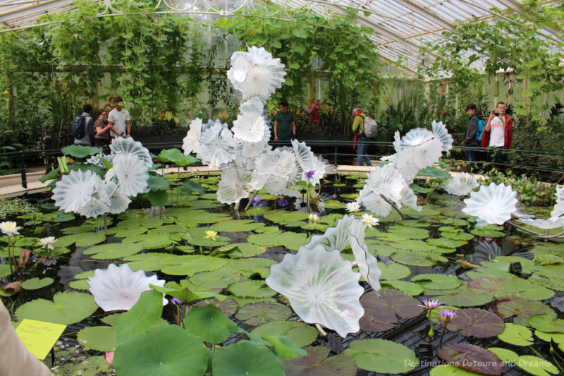 Pond inside the Waterlily House at Kew with floating water lilies and a Chihuly glass art exhibit