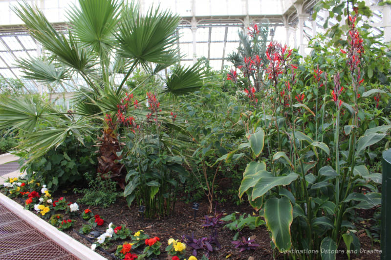 A collection of flowering plants and fern-like greenery inside the Temperate House at Kew Gardens