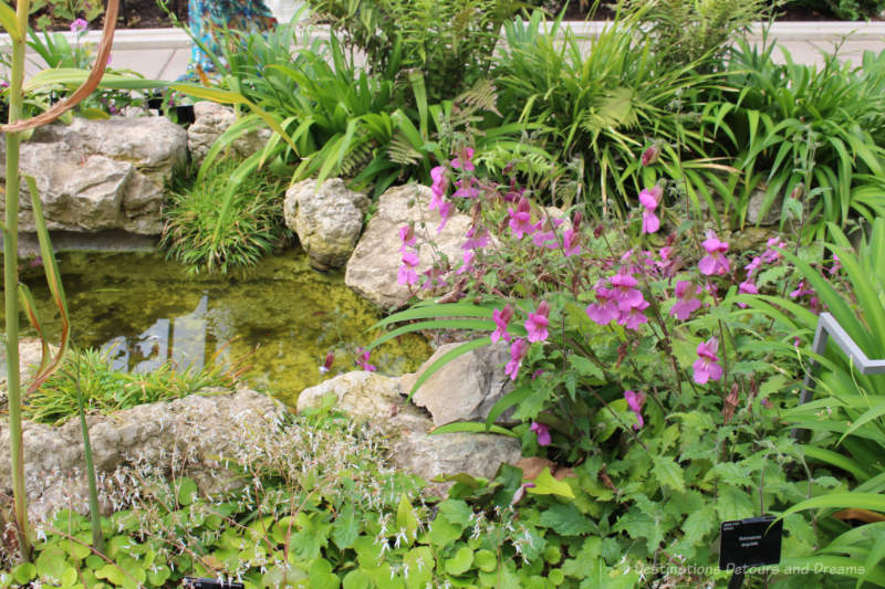 Plants and rocks alongside a pond in the Temperate House at Kew Gardens